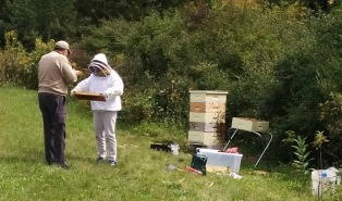 A bee keeper inspecting a tray from the hive