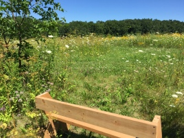 Wooden memorial bench facing out across the Friends Prairie
