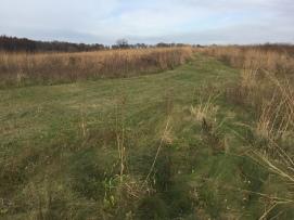Mowed trails through the Friends Prairie