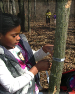 A girl has wrapped a tape measure around a tree trunk to figure out the circumference and diameter
